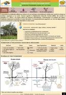 Fiche LCD: Faidherbia Albida